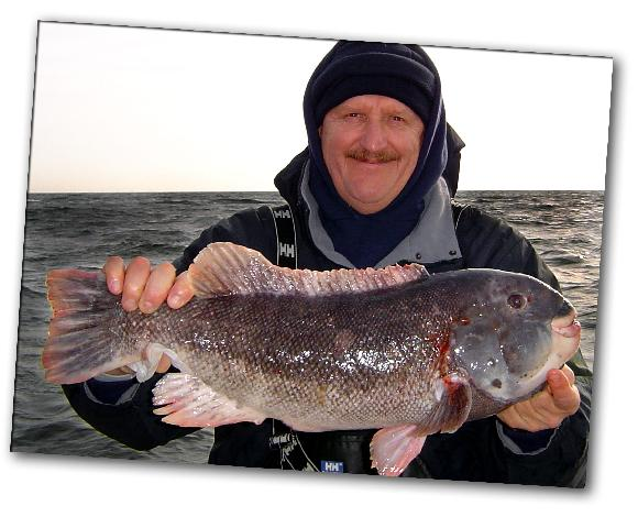 Caught on the Codfather blackfish tautog white chin