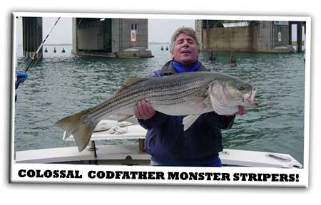 Collossal Striped Bass 3rd Meadowbrook Bridge                       on the Codfather